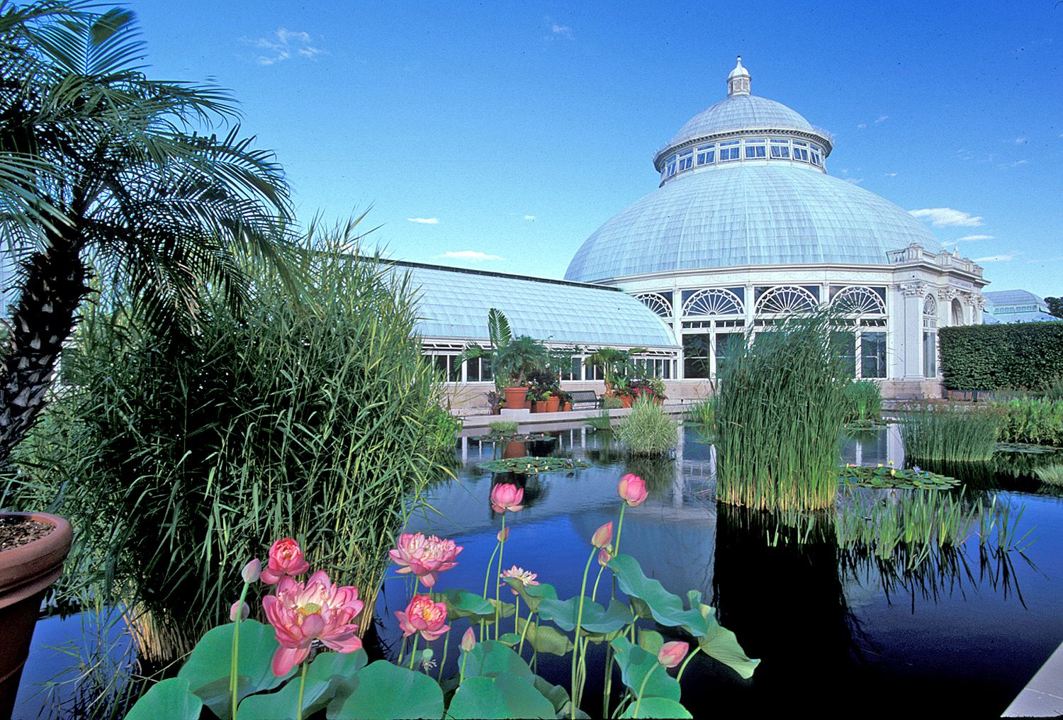What to do in Belmont faviana new york botanical garden